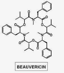 bovericin - Pragas e Eventos