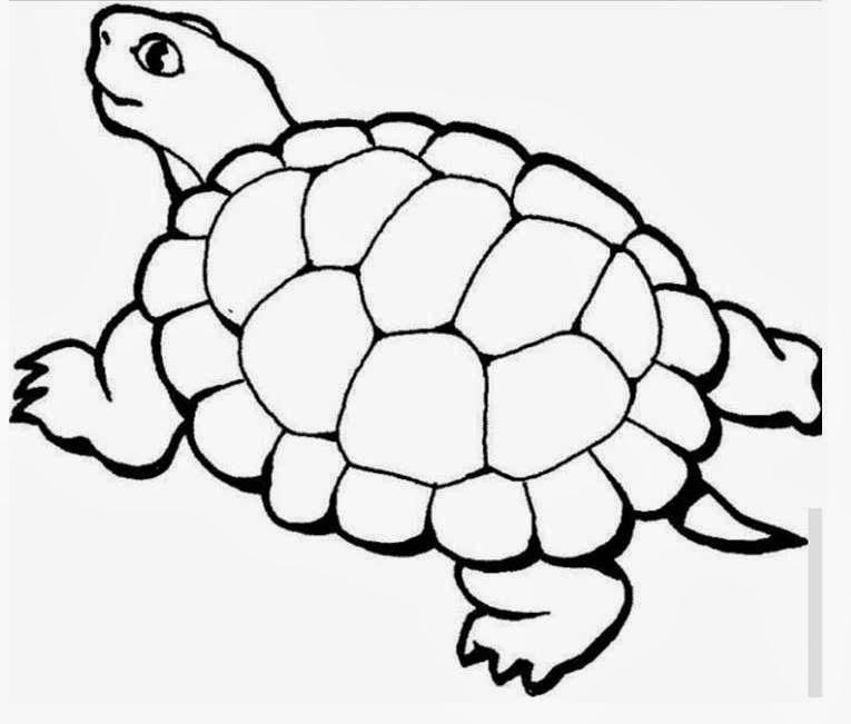 A lenda da tartaruga
