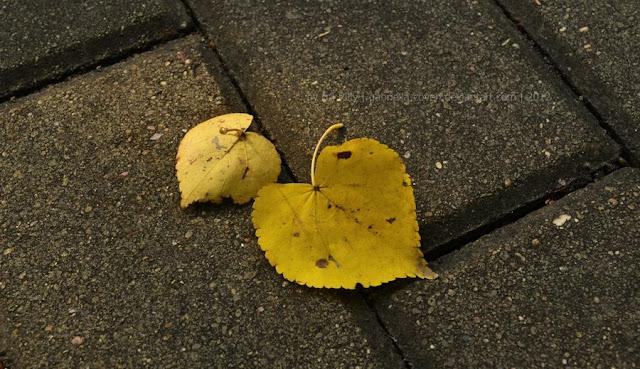 Autumn Hearts5