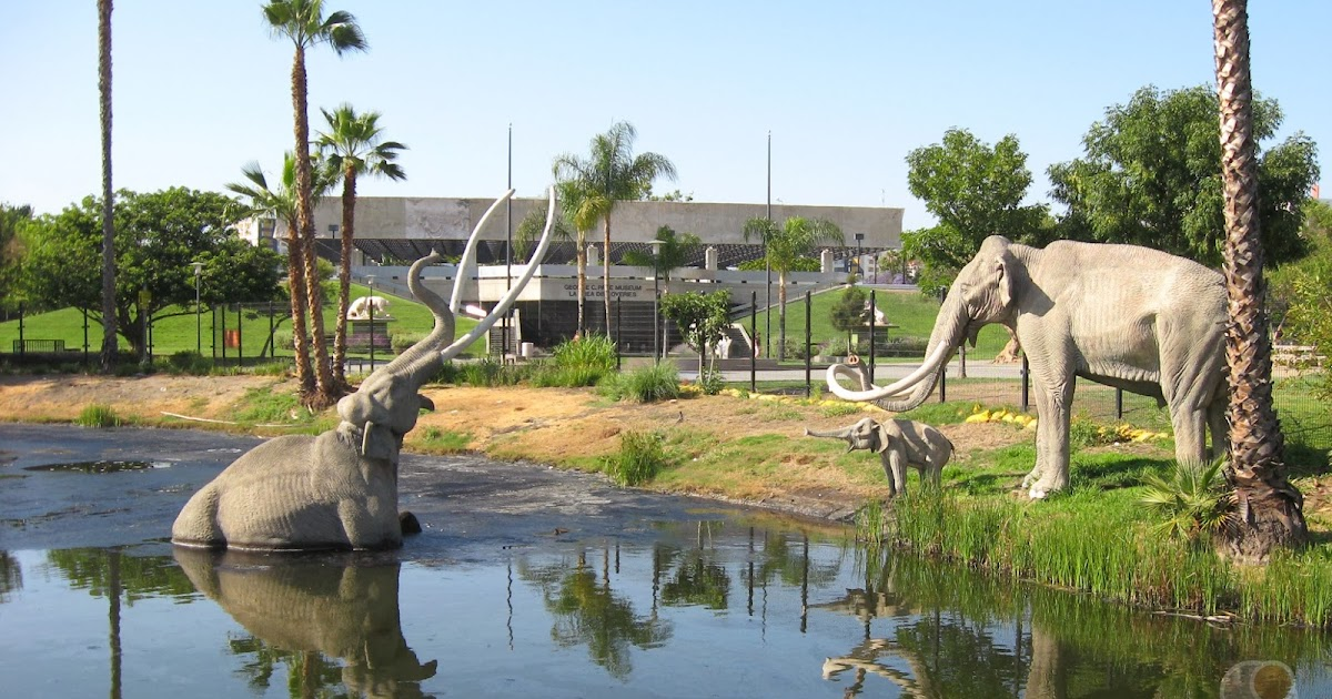 an overview of the geology of la brea tar pits The la brea tar pits are a group of tar pits around which hancock park was formed in urban los angeles describes the geology and paleontology of the asphalt seeps.