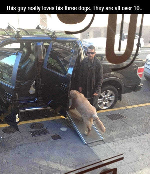 People doing amazing things for animals (28 pics), a man really loves his dogs he put a bridge to his car
