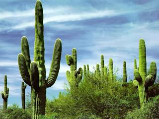 nama latin kaktus, ciri khusus kaktus, jenis kaktus