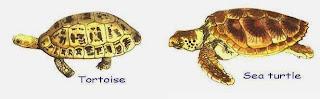 Turtles/Tortoises