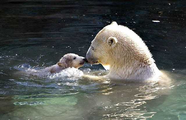 Animals With Babies | Baby Animals