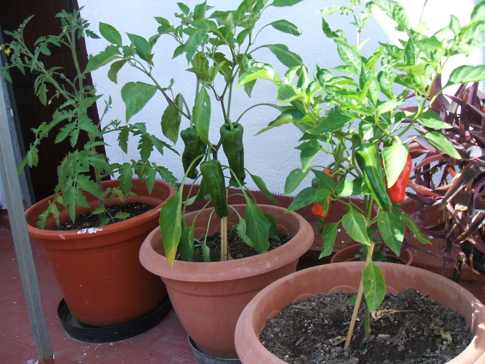Naturalmente la huerta for Cultivo de arboles frutales en macetas