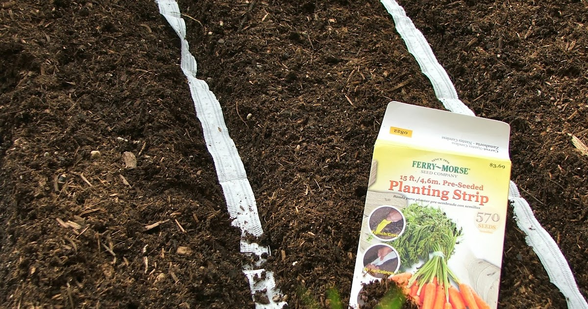 Garden and bliss october planting guide southern california - Gardening in october a brief to do list ...