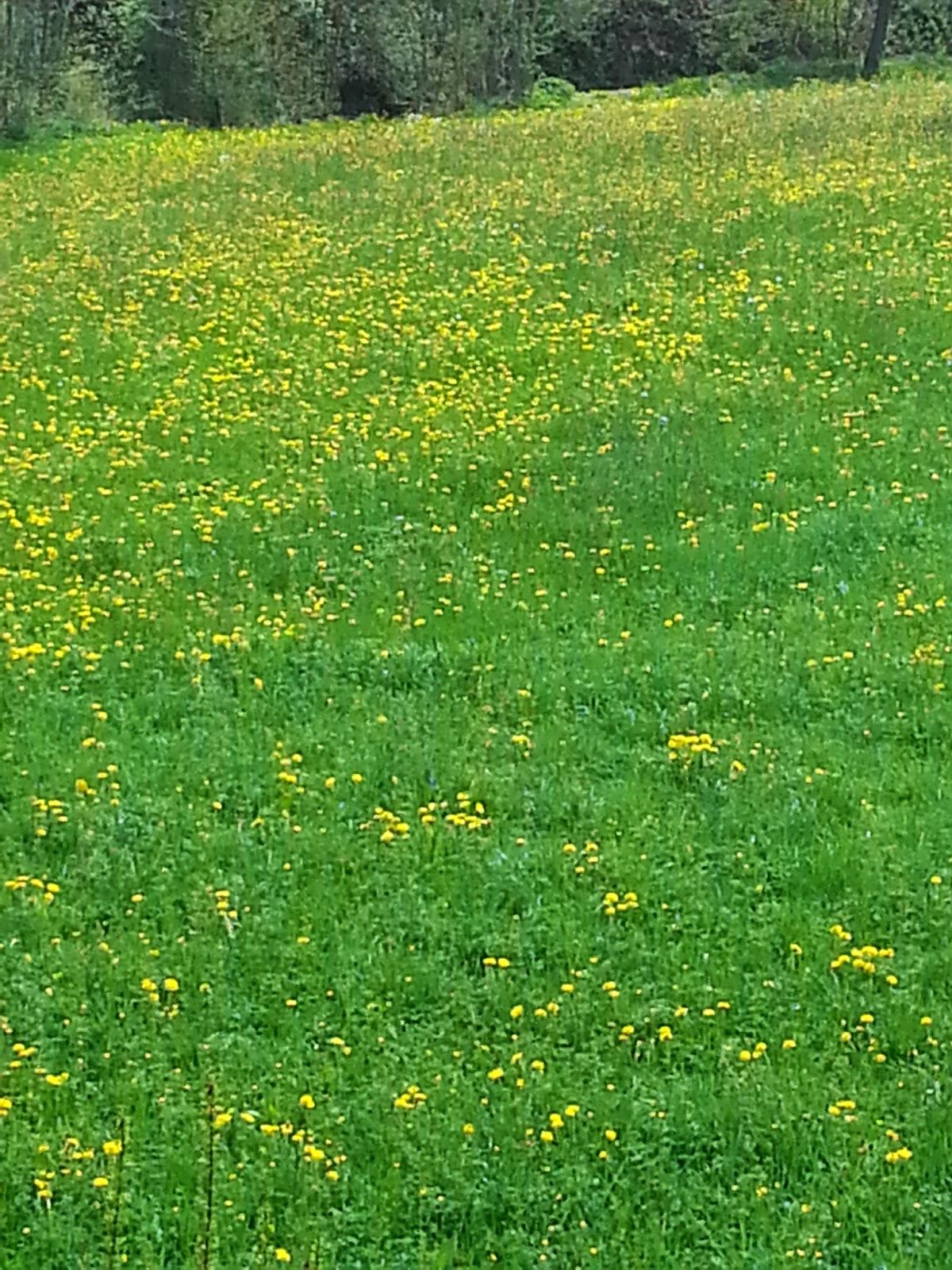 É primavera na Suíça.