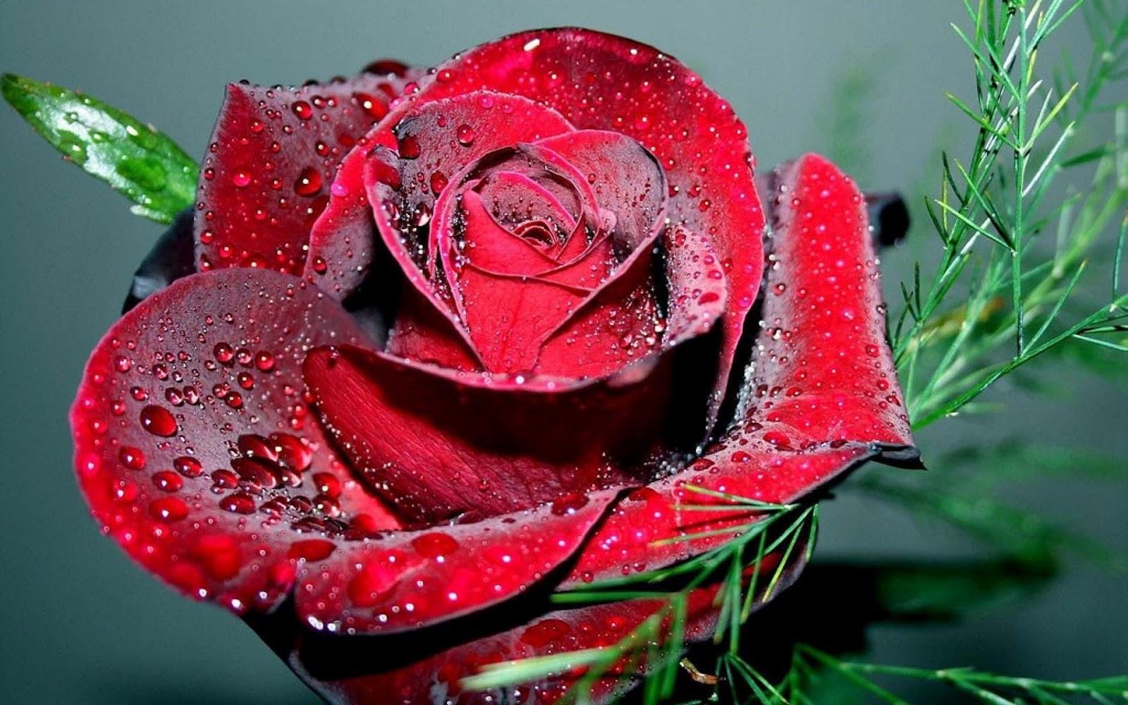 tulpen achtergrond met een - photo #16