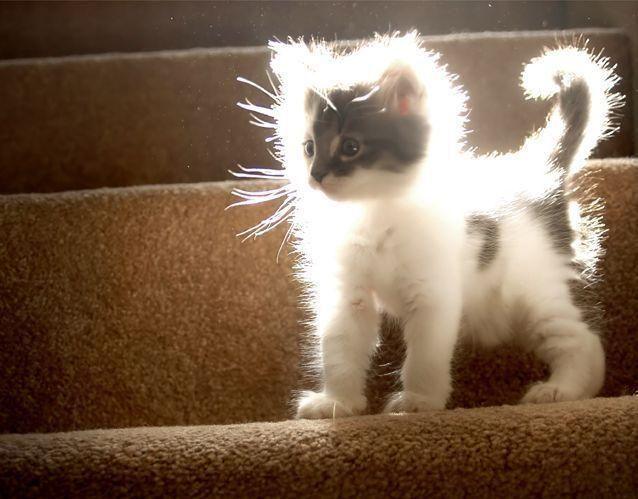 Это не то что кот редискин серый и