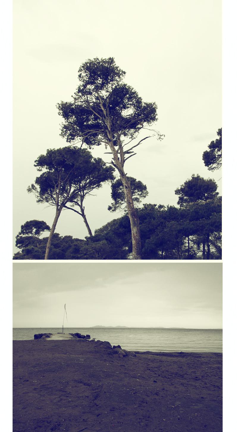pins plage île de Porquerolles