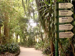 Trilhas no Bosque Rodrigues Alves