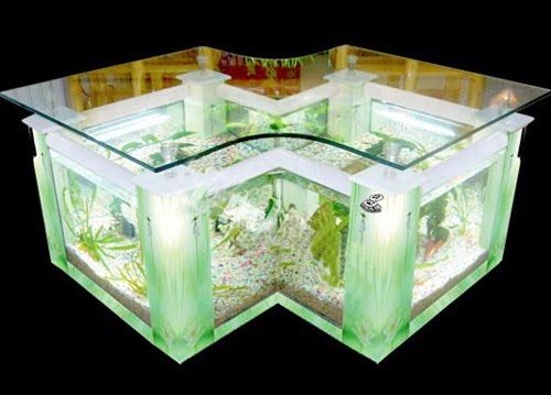 Freshwater Aquarium Tank - What to Buy and How to Set it Up