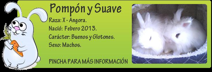 http://mirada-animal-toledo.blogspot.com.es/2013/03/pompon-bebe-precioso-en-adopcion.html