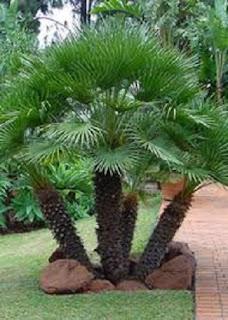 Plantas para Ambientes Frios, Temperaturas entre 3 y 13 °C