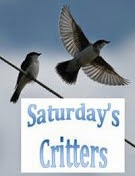 http://4.bp.blogspot.com/-ych1aWiHANY/U0rS1LIHX_I/AAAAAAAAXU8/PpMQjPyIjL0/s176/Saturday%2527s%2BCritters_2.jpg