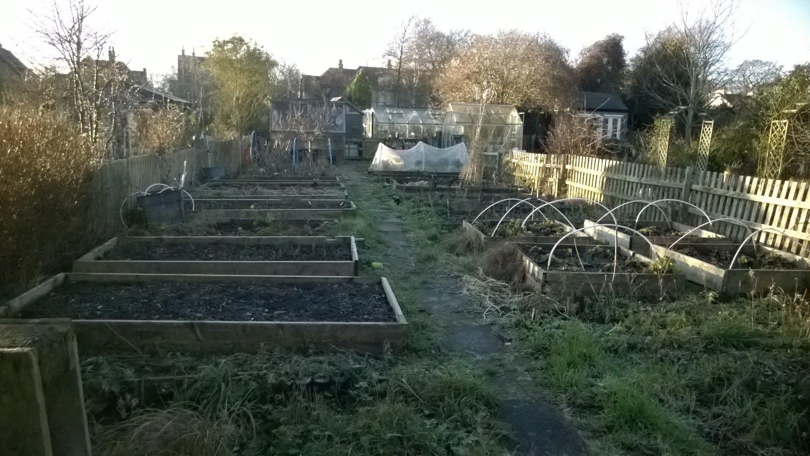 Anne's Gardening Diary