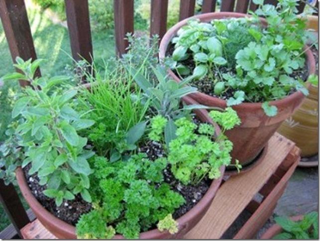 Arte y jardiner a el jard n en macetas for Hierbas aromaticas y medicinales