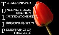 calvinism tulip