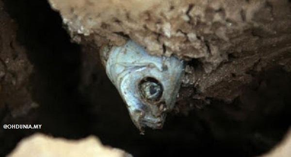 Pelik - Bagaimanakah Ikan-ikan Ini Boleh Terselit Dalam Batu? (6 Foto)