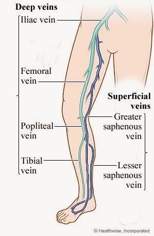A veia safena interna é a principal veia do sistema venoso superficial do membro inferior