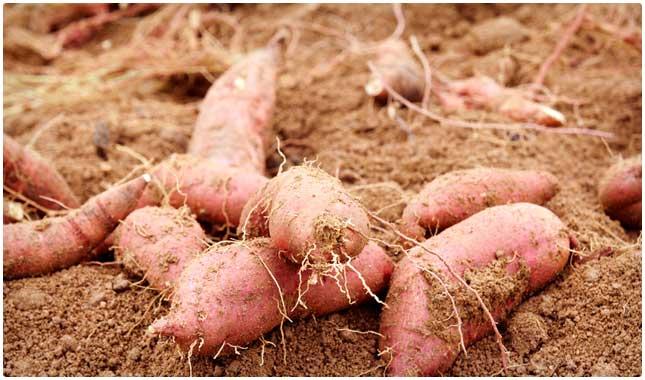 how to cook potatoes to keep vitamin c