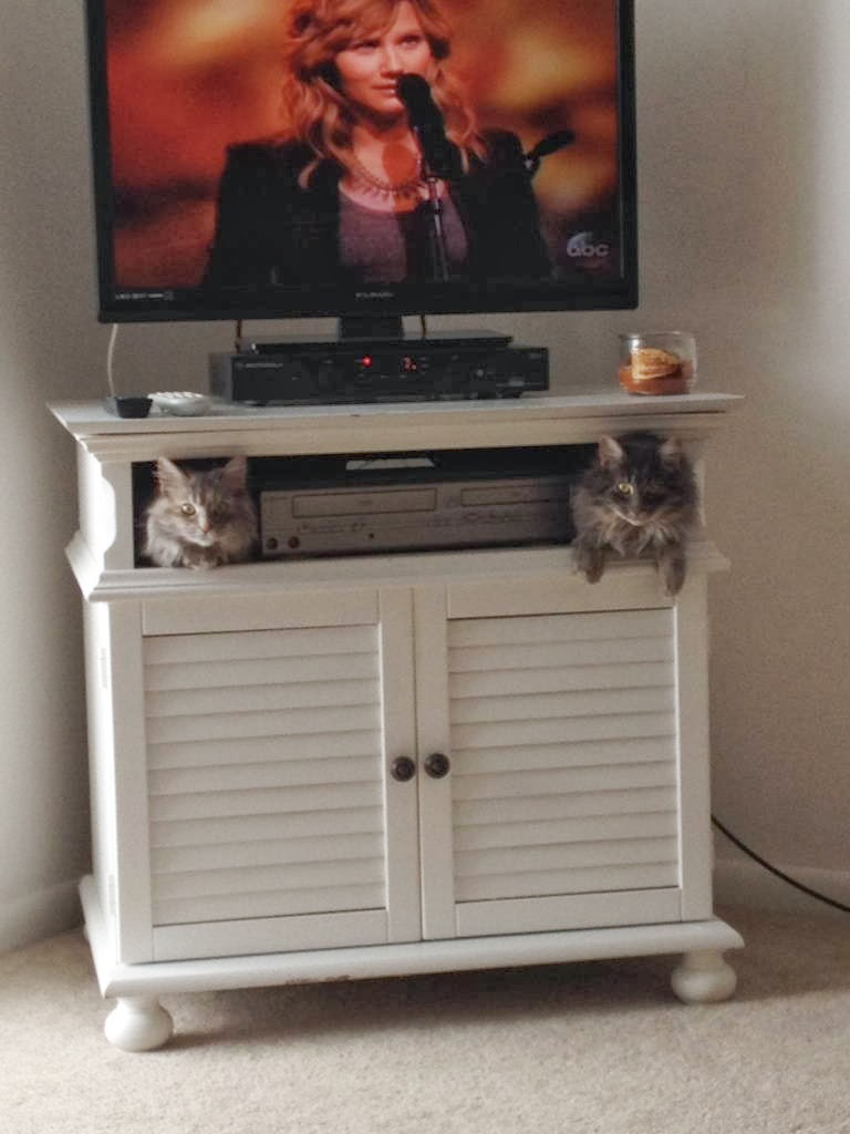 Funny cats - part 88 (40 pics + 10 gifs), cats sit in tv cabinet
