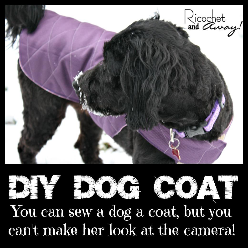 Ricochet and away diy dog coat diy dog coat jeuxipadfo Image collections