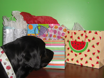 Picture of Rudy staring at 4 large gift bags (full of pressies... for him)