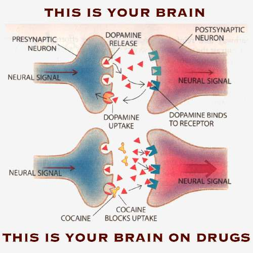 the effect psychoactive drug have on Recommended that the government ban all new psychoactive drugs and allow  only  variation that have a specific neuropharmacological effect on brain.