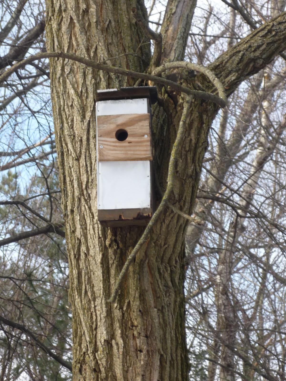 bird house vacancies south burlington vtbird nest box