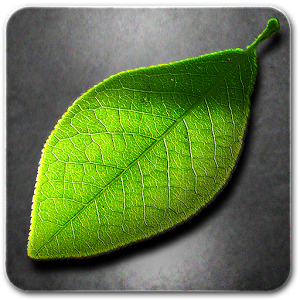 Fresh Leaves lwp