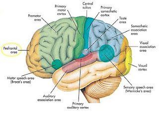 7 Misteri Unik Otak Manusia dari daniel maulana