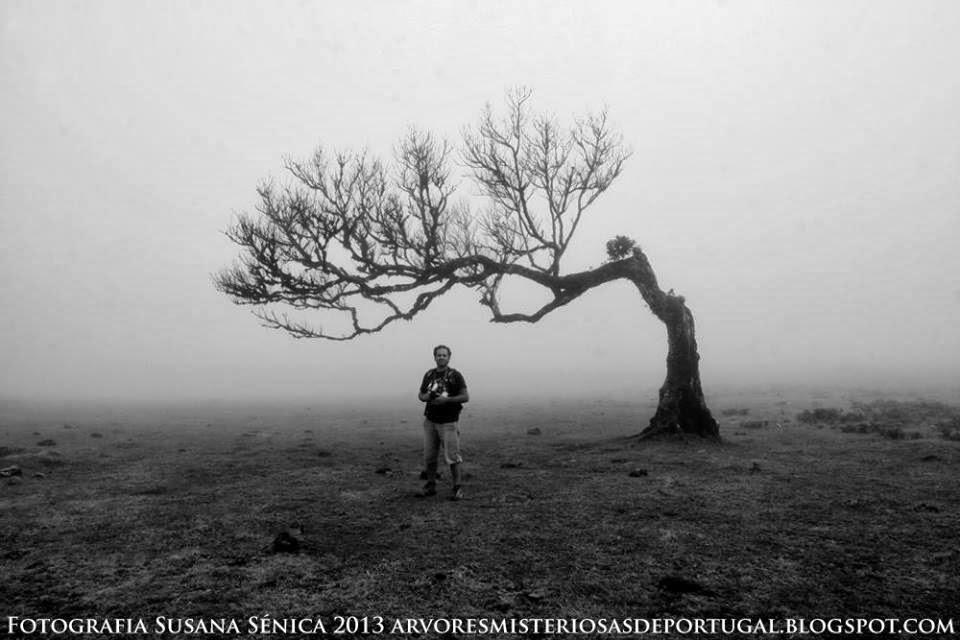 Zito Colaço ao encontro das Àrvores Misteriosas da Madeira