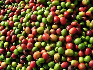 Por qué elegir café orgánico para consumo
