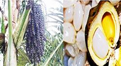 http://indonesian-herbal-medicine.blogspot.com/2014/12/palm-sugar-for-home-remedies.html