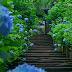 あじさいが魅せる抒情美。梅雨に彩られた風情あふれる古都『鎌倉』