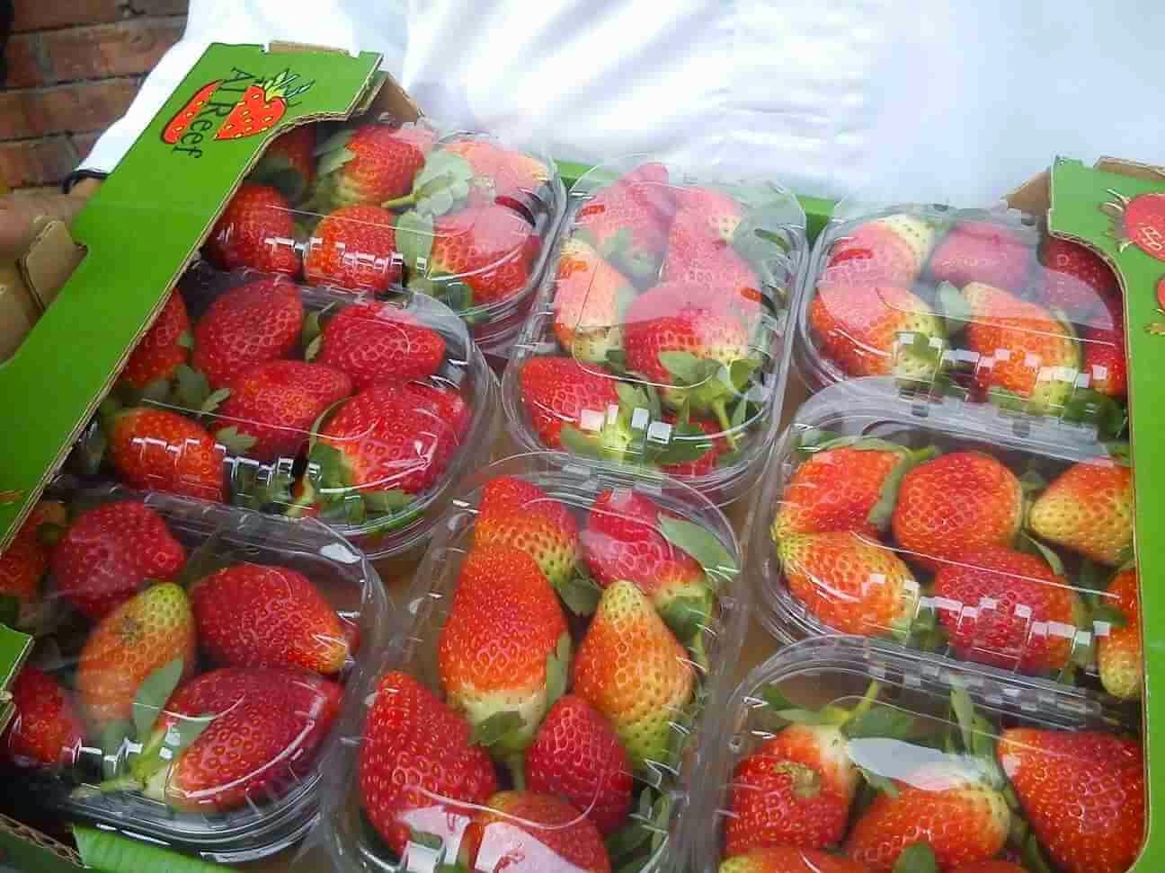 fresh_strawberry_egypt