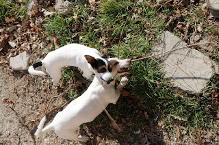 Thelma and Louise share a stick/tree/sapling