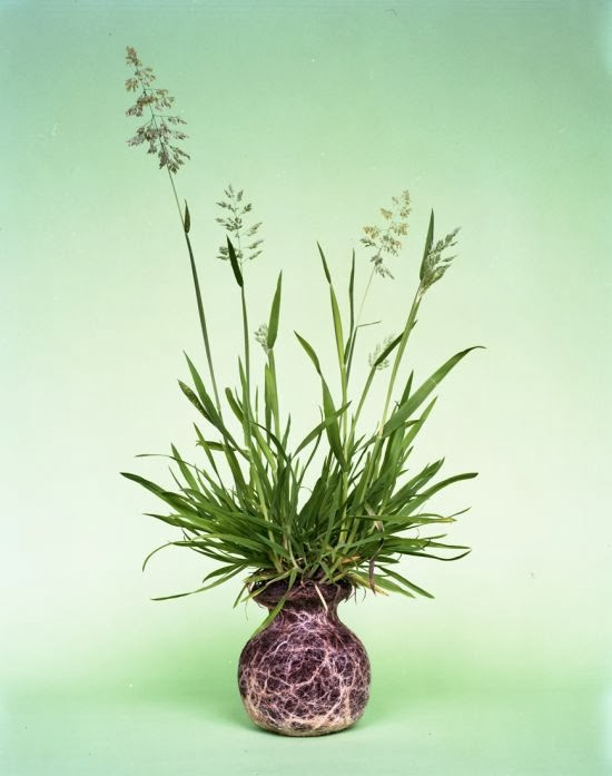 Diana Scherer photography nature plants roots vase