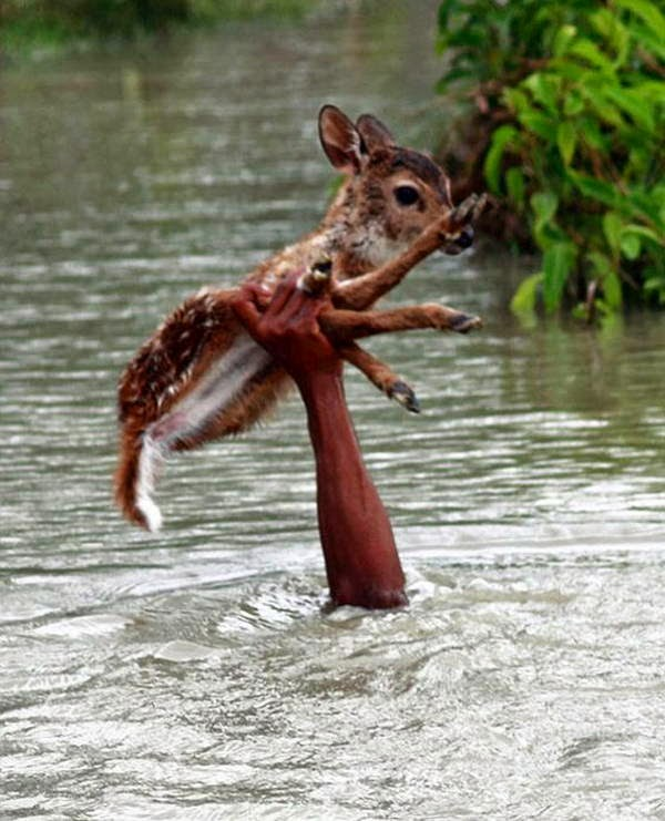 People doing amazing things for animals (28 pics), a guy rescued a baby deer from the flood