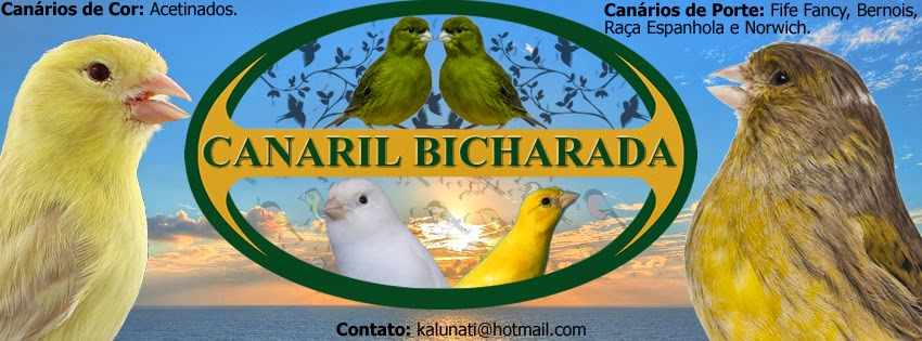 Canaril Bicharada
