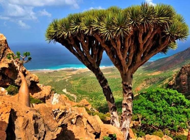 socotra+island+pulau+dajjal billyinfo16 Keanehan Pulau Socotra di Yemen, pulau Dimana DAJJAL Dirantai?