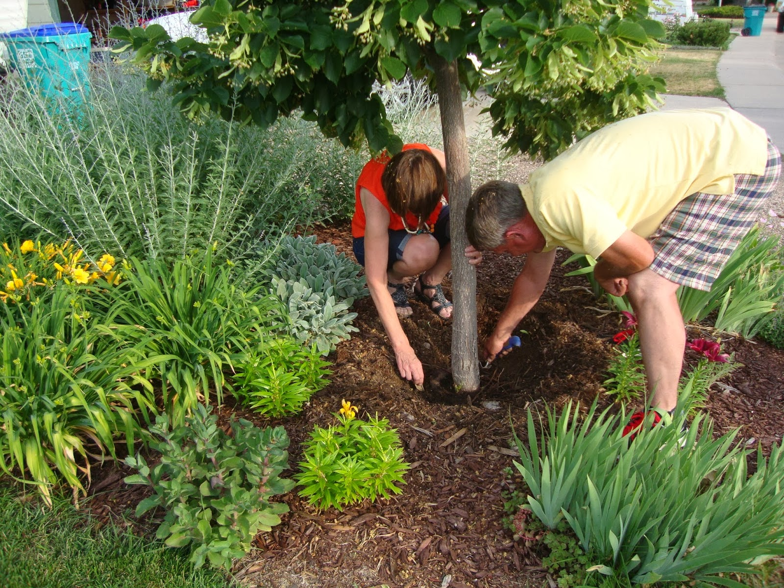 Landscaping Tips Removing Tree Stumps From Your Lawn or Backyard