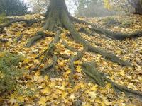 26- Kötü bir sözün misali, gövdesi yerden koparılmış, o yüzden ayakta durma imkânı olmayan (kötü) bir ağaca benzer.