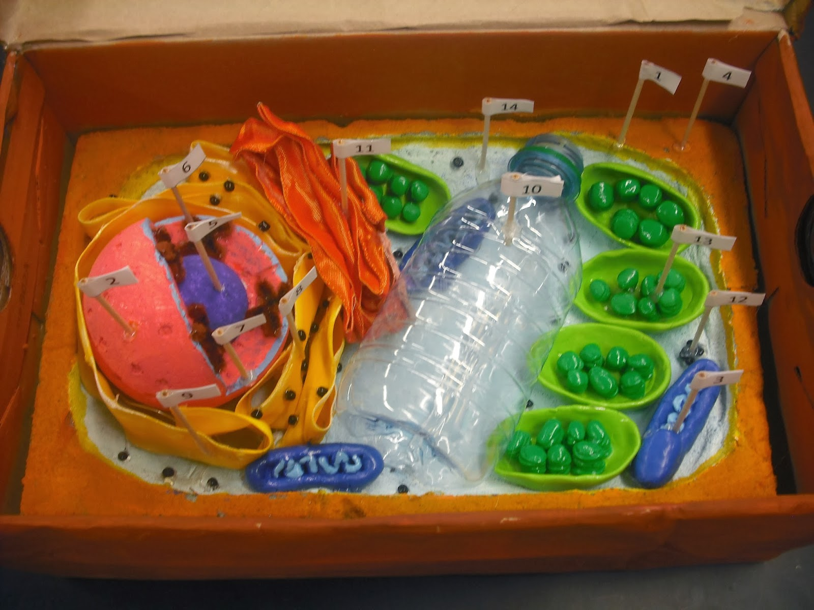 Designed by youth pollicita middle school animal and plant cell designed by youth pollicita middle school animal and plant cell models by mr lalatas 7th8th grade students ccuart Gallery