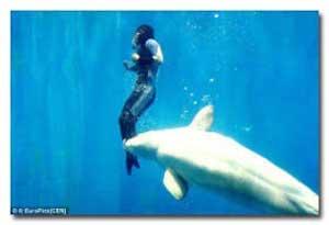 http://gubuk-fakta.blogspot.com/2013/12/aksi-penyelamatan-hewan-terhadap-manusia.html