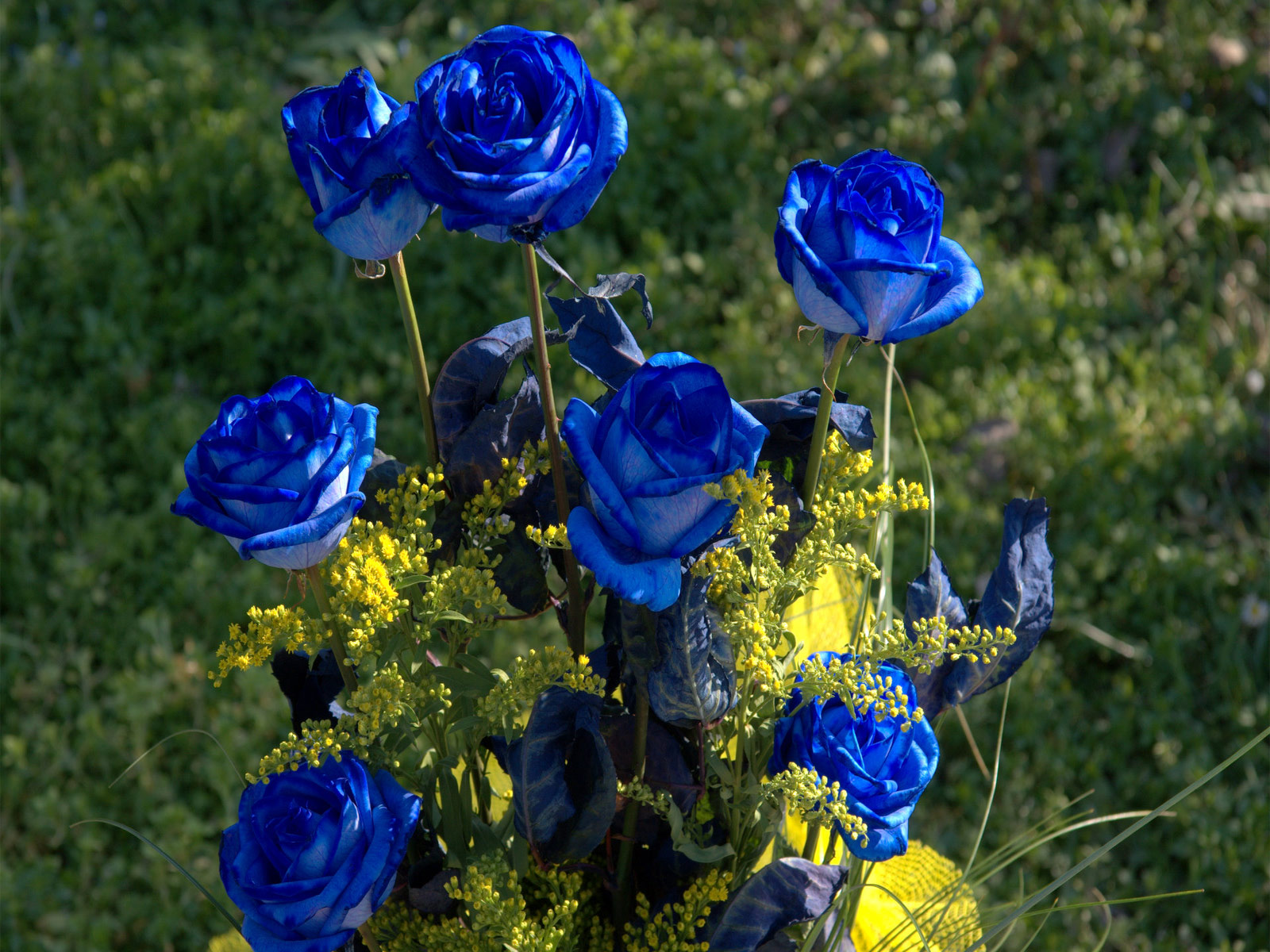 Knumathise real blue roses for sale images real blue roses for sale buycottarizona