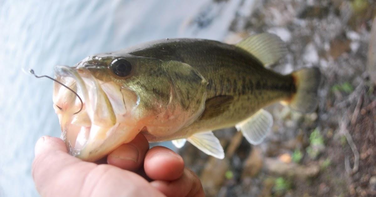 Litton 39 s fishing lines largemouth bass on plastic worms for Bass fishing with plastic worms