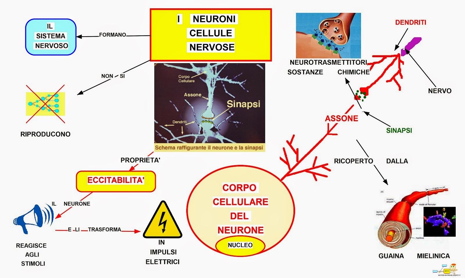 Mappa concettuale neurone - I diversi tipi di droga ...