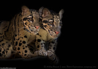 7. Siamese Spirits by Ashley Vincent